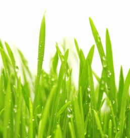 water-drops-on-green-grass